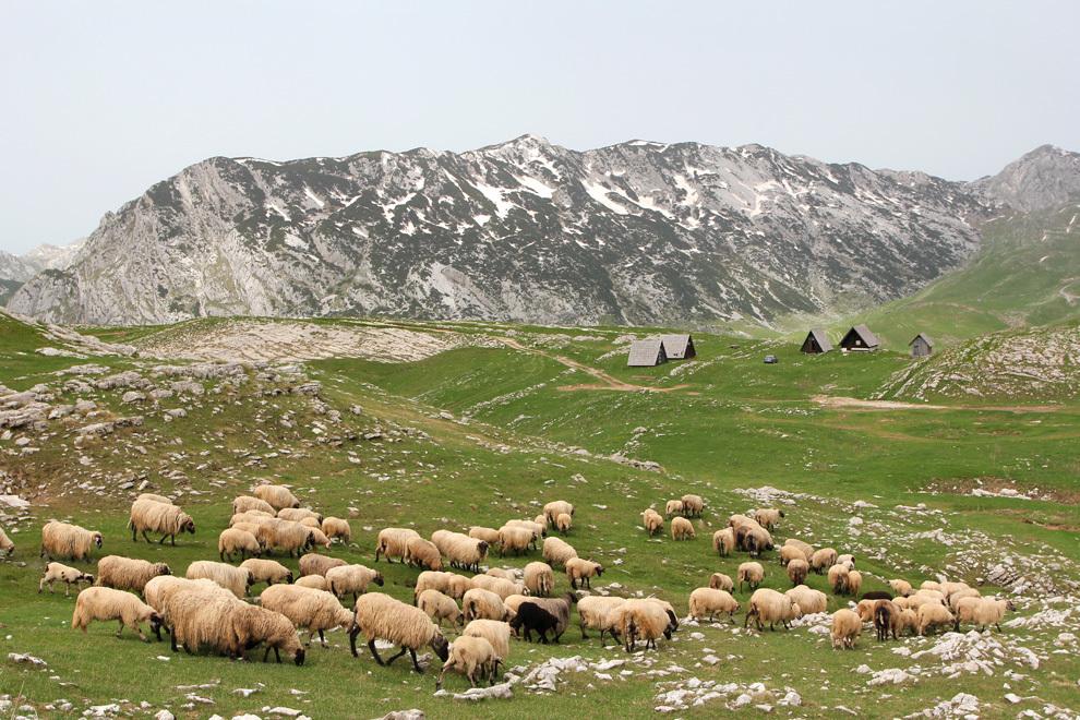 Divja pokrajina in pastirsko življenje v črnogorskih hribih