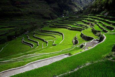 Neskončne riževe terase v obliki anfiteatra