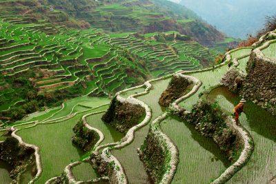 Dramatičnost riževih teras ne pozna meja