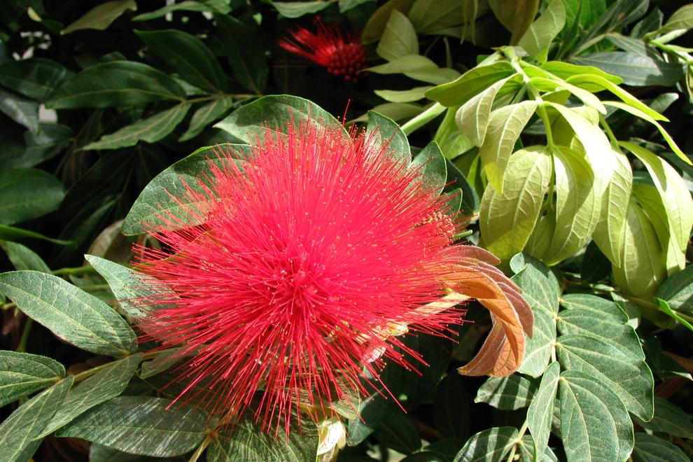 V spodnjem delu vzpona hodimo skozi tropsko džunglo bogato z rožami in živalskim svetom