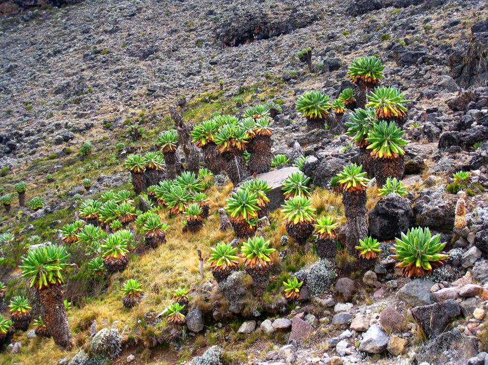 Eksotične rastline so eden zaščitnih znakov Kilija