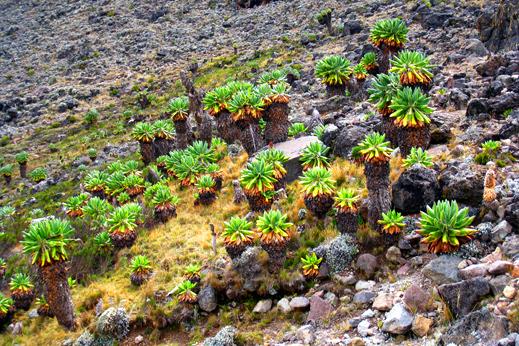 Eksotične rastline so eden zaščitnih znakov Kilija.