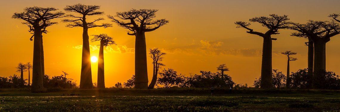 Panorama Baobaboov, Madagaskar