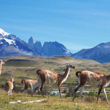 Patagonske stepe na argentinski strani