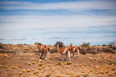 potovanje-patagonija-treking-21