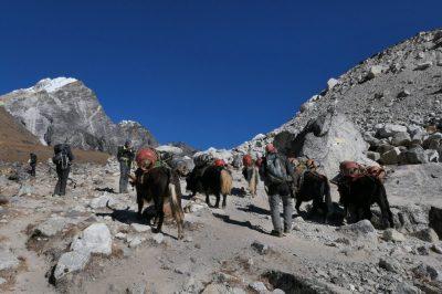 Karavane jakov na poti iz Namče Bazarja proti baznemu taboru ali pa naprej v Tibet.