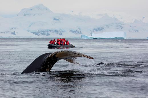 Ogled kitov na Antarktiki.