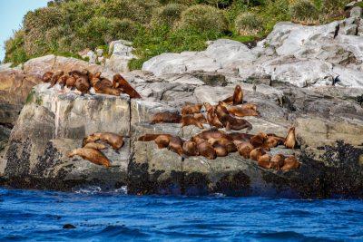 Na Pacifiku gremo gledat morske leve in pingvine