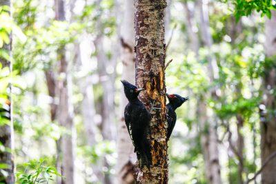 Deževni gozd je dom številnim pticam